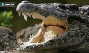 Video: Cá sấu mẹ hung hãn tấn công nhau vì hiểu lầm