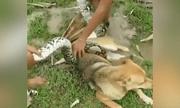 Video: Thót tim cảnh 3 bé trai túm đầu trăn