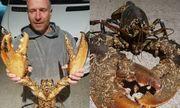 Video: Nhà thám hiểm Anh bắt được tôm hùm dài 1,2 m