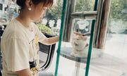 Cuộc chiến thương mại Mỹ - Trung Quốc: Đến chó mèo cũng bị ảnh hưởng