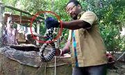 Video: Rắn có 2 màu đen trắng bí ẩn xuất hiện ở Ấn Độ