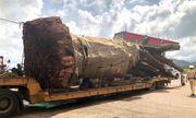 CSGT Bình Định tạm giữ xe đầu kéo chở cây