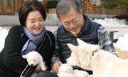 'Quốc khuyển' Triều Tiên tặng Hàn Quốc sinh 6 chó con