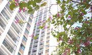Giải pháp nào cho những tranh chấp hiện nay tại các chung cư?