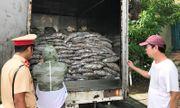 Xe tải chở 3,5 tấn cá bốc mùi hôi thối, rỉ đầy nước ra đường