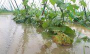"""Rau xanh ở Đà Nẵng """"đội giá"""" chóng mặt sau trận mưa ngập lịch sử"""