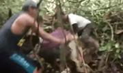 Video: Rùng mình cảnh trăn