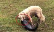 Video: Chó lao xuống hồ, tung đòn thần tốc bắt gọn cá trê