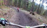 Video: Thót tim trước cảnh hai nam thanh niên bị gấu hoang dã rượt đuổi