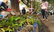 Chợ lan rừng nhộn nhịp