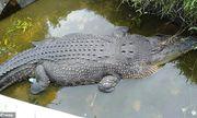 Video: Bắt sống cá sấu dài 5m nhảy lên tường ăn thịt nhà khoa học ở Indonesia