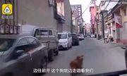 Ông chủ bị đột quỵ khi đang mua ve chai, chú chó trung thành dẫn xe cứu thương tới cứu
