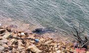 Hà Tĩnh: Phát hiện thi thể đang phân hủy nổi trên hồ