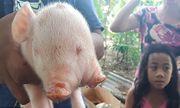 Video: Lợn chào đời có hai đầu ba mắt gây xôn xao