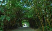 """Hành trình hơn 24 năm phủ """"rừng xanh"""" giữa lòng Hà Nội của doanh nhân người Úc"""
