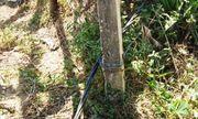 Vụ đôi vợ chồng bị điện giật ở vườn chuối: Giám đốc điện lực nói không liên quan