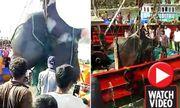 Video: Cận cảnh ngư dân bắt được cá đuối khổng lồ nặng 1,3 tấn