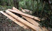 Quảng Bình: Phát hiện gỗ lậu được giấu trong phòng làm việc tại UBND xã