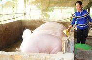 Thị trường - Trung Quốc mua lợn giá cao: Cẩn thận bong bóng tăng trưởng