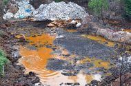 Tin trong nước - Vật nuôi, cây trồng chết ồ ạt bên bãi rác nghi đổ hóa chất