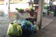 Tin trong nước - Hải Phòng: Đình chỉ 2 cơ sở cung cấp suất ăn cho công nhân không phép