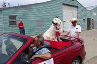 Tin thế giới - Mỹ: Chú chó 3 năm liên tiếp trúng cử thị trưởng