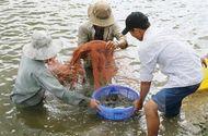 An ninh - Hình sự - Xem xét khởi tố vụ giả giấy tờ kiểm định thức ăn thủy sản
