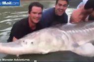 """Video-Hot - Bắt được """"thủy quái"""" có mõm lợn nặng gần 300 kg"""