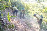 Môi trường - 5 năm góp sức giữ màu xanh cho rừng