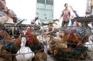 Kinh doanh - Sẽ cấm bán gà vịt sống tại chợ kinh doanh thực phẩm?