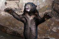 Ăn - Chơi - Tranh cãi việc gấu chó bị bỏ đói gầy trơ xương trong vườn thú