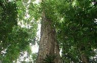 Tài nguyên - Nỗ lực bảo vệ và phát triển rừng nơi miền biên viễn
