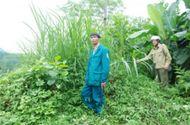 An ninh - Hình sự - Truy bắt nghi phạm chém người tử vong trên chiếu bạc rồi bỏ trốn vào rừng