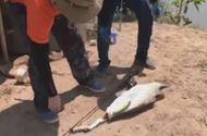 Video-Hot - Câu được cá nặng 8kg bằng... mồi nhựa