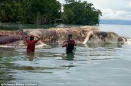 Video-Hot - Người dân Indonesia hoảng hốt phát hiện sinh vật kỳ bí dài đến 15m