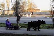 Video-Hot - Bà cụ 79 tuổi cưỡi xe chó đi khắp thành phố