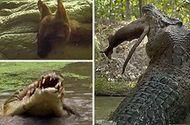 Video-Hot - Cá sấu khổng lồ chớp nhoáng tung người xé đôi kangaro