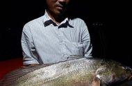 Tin trong nước - Ngư dân bắt được cá nghi sủ vàng 8 kg giá tiền tỷ trên sông Tiền