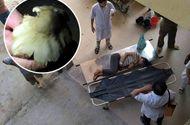 Tin trong nước - Ăn nấm lạ, 6 người phải nhập viện do ngộ độc