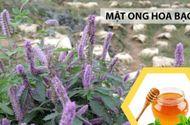 Video-Hot - Hà Giang: Nâng cao năng suất, chất lượng của mật ong bạc hà