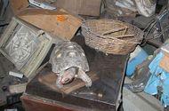 """Đời sống - Con trai phát hiện sự thật """"rúng động"""" sau 30 năm con rùa cưng biến mất"""
