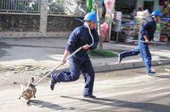 Tin tức - Vì sao Hà Nội chưa tiến hành bắt chó thả rông?