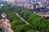 Tin trong nước - Hà Nội di dời, chặt hạ hơn 1.000 cây cổ thụ trên đường Phạm Văn Đồng
