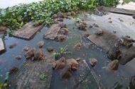 Tin tức - Những cách nuôi ếch độc đáo giúp chủ nhân thu tiền tỷ mỗi năm