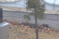 Video-Hot - Video: Binh sĩ Triều Tiên đào tẩu bị đồng đội rượt đuổi, nổ súng