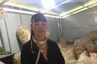 Cần biết - Lương y Triệu Thị Hòa – Xóa tan nỗi đau do các bệnh xương khớp