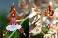Ngắm những loại hoa khiến nhiều người tròn mắt vì hình dáng chẳng giống ai