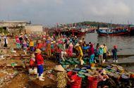 Ngư dân Quảng Ngãi trúng đậm mùa cá cơm trong chuyến biển đầu năm