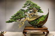 """Những """"siêu phẩm"""" bonsai độc đáo, nhà giàu có tiền cũng khó mua"""