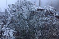 Tin tức - Clip: Băng tuyết bất ngờ phủ trắng đỉnh Fansipan khi sắp vào hè